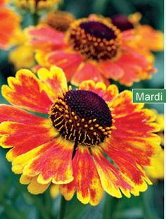 great garden website