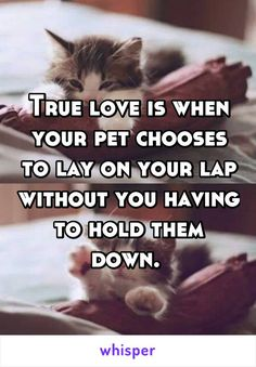 True love is when your pet chooses to lay on your lap without you having to hold them down.