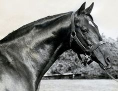 Nasrullah*, Son of Nearco & Grandsire of Secretariat... from Secretariat's Meadow website