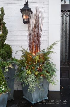 Container garden, winter container design, winter container garden, using greenery in containers, gardening, Unique by Design l Helen Weis #CurbAppealContest @schlagelocks
