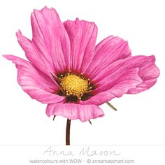 Its hugely detailed centre makes this pretty pink cosmos really pop!