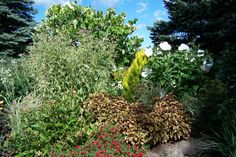 Sarah's Garden Aug 28, 2014