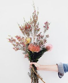 Gardening Autumn - Image Via: Birdasaurus - With the arrival of rains and falling temperatures autumn is a perfect opportunity to make new plantations Flower Power, My Flower, Cactus Flower, Fresh Flowers, Wild Flowers, Beautiful Flowers, Autumn Flowers, Exotic Flowers, Purple Flowers