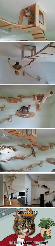 Cat installation Cat Playground, Playground Flooring, Cat Furniture, Funny Furniture, Cute Cats, Cat Trees, Diy Cat Tree, Cat House Diy, Cat Tree House