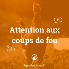 🐔 Attention aux coups de feu #contrepèterie #lapoulequimue #coupdefeu #panpan #attention Pan Pan, Attention, Coups, Movie Posters, Movies, Fire, Films, Film Poster, Cinema