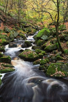 Padley Gorge, Peak District, England by Nature Pictures, Beautiful Pictures, English Romance, Irish Sea, Summertime Sadness, Peak District, Tree Forest, North Sea, Derbyshire