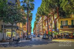 Cote D'azur Photograph - Palm Trees On Street In Antibes, France by Liesl Walsh
