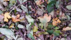 opdracht structuur #3 natuurlijke structuur een paar gevallen blaadjes die door de wind bij elkaar gekomen zijn