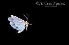 moth - Buscar con Google