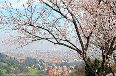 Bologna, I colli Bolognesi, foto di Francesco Malpensi Photography