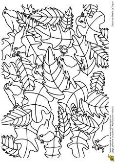 Cache Cache Feuilles Oiseaux, page 13 sur 16 sur HugoLescargot.com