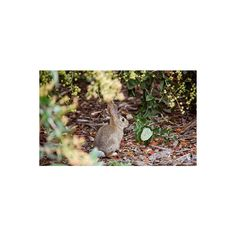 Path of Artemis ❤ liked on Polyvore featuring animals, backgrounds, pictures, photo and bunnies
