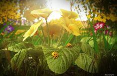 Μέθυσε με την μυρωδιά των δέντρων , των λουλουδιών , ενός νεογένητου μωρού …. με ο,τιδήποτε.