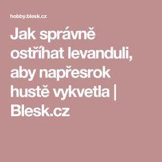 Jak správně ostříhat levanduli, aby napřesrok hustě vykvetla | Blesk.cz