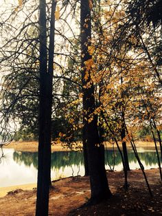 Road trip across California - 2014 walk around town called Paradise and a lake nearby. #roadtrip #chico #slovaktraveler #nature #californianature #autumn #pinetree #lake #colorful #leaves