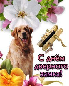 Happy Memes, Dogs, Animals, Animaux, Doggies, Animal, Animales, Pet Dogs, Dog