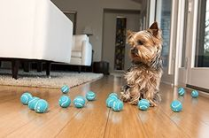 Give your arm a break with the iFetch Mini Automatic Ball Launcher Dog Toy. Designed especially for small to medium dogs, this interactive dog toy launches the ball for you! It's perfect for when you're away or busy doing other things—like getting his dinner ready—while ensuring he gets all the mental and physical exercise that he needs. All you have to do is plug it in, choose your launching distance and then drop in a mini ball. Soon your dog will learn how to drop it himself, which…