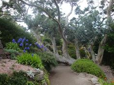 Inverewe Garden, Poolewe, Ross-shire, Scotland. A tropical garden in a coastal town of Scotland more north than Moscow.