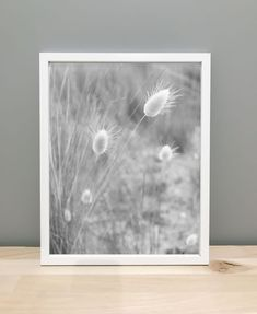 Printable Art Photography! Black and White Beach foliage - Life of Whykes