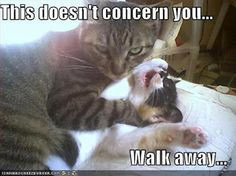 """This could have gone in the pets or """"wicked humor"""" board...this cracked me up!"""