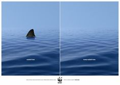 WWF, Via Turkey.  Sharks are 400 million years old.  We are killing tens of millions of them a year.