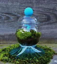 Teal blue butterfly and moss