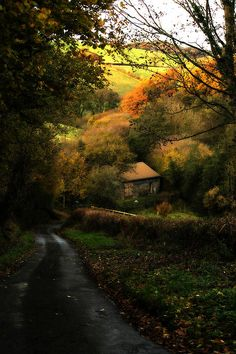 A beautiful, cozy little country lane in the English countryside, leading to a delightful little farmhouse. Autumn trees line the horizon and the edges of the lane.