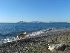 Passeggiata in riva al mare!