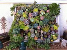 6. Transform The Old Frame Into Vertical Garden  Instead of framing a picture, why not a whole garden. Here you have such an example where cuttings of assorted succulents knit together to create colorful, textural living tapestry.