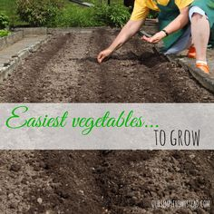 After you have amended your soil, and you know your last frost date, you are ready to plant your first garden with these easiest vegetables to grow.