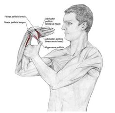 Common Shoulder Stretching Exercises   FrozenShoulder.com