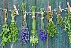 Bisnis Tanaman Obat, Hidup Sehat ,Peluang Usaha Pertanian