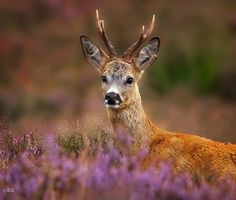 Photograph Prout male by Alexander Koenders on 500px