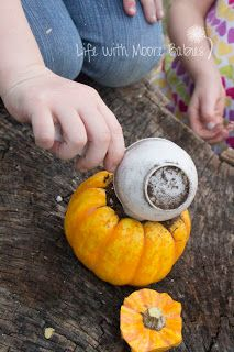 Growing Pumpkins in Pumpkins -- cut the top off pumpkin, add potting soil, water, and watch grow!
