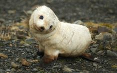 Cute animals to brighten up any day.