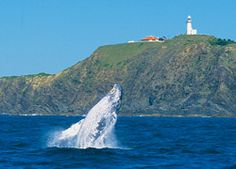 Byron Bay was amazing. I want to go back and do some whale watching.