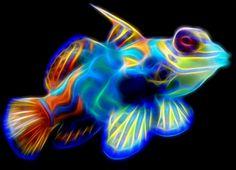 Mandarin Fish by Bob Smerecki