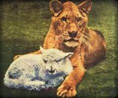 Image result for little tyke lioness