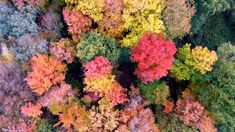 Celebrating the colors of fall in upstate New York.  Shot with DJI Phantom 3 Professional.  Music: Endless Story About Sun and Moon by Kai Engel   http://freemusicarchive.org/music/Kai_Engel/Idea/Kai_Engel_-_Idea_-_02_Endless_Story_About_Sun_and_Moon