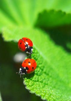 ladybugs Ace Exterminators