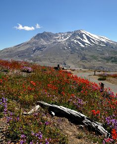 Mt. St. Helens, the volcano that blew 2 months before I was born. :) I have collected ash and gifted it when I was a kid. Would love to visit it again.
