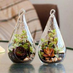 Teardrop Terrarium Kit Duo Collection Purple by ShopSucculents, $21.99