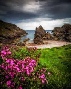 Coastal Flora - Spring flowers on the shores of Portknockie in Morayshire, Scotland.