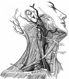 """Diagram of the Neck, Grey's Anatomy  """"Aren't chokes dangerous?"""" I've been asked this many times over the years by students, parents, observers and outsiders who know little about jiu-jitsu and who get confused when we start talking about chokes and armbars. Diagram of the Neck, Grey's Anatomy  """"Aren't chokes dangerous?"""" I've been asked this many ..."""