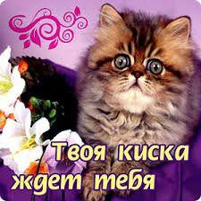 Výsledok vyhľadávania obrázkov pre dopyt киска Cats, Animals, Gatos, Animales, Animaux, Animal, Animais, Kitty, Cat