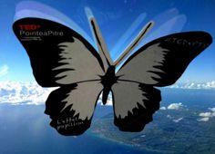Survoler la Guadeloupe et trouver l'inspiration. #effetpapillon #TEDxPTP