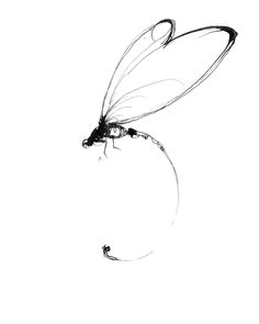 http://delamatyr.com/wp-content/uploads/2011/10/danny_delamatyr_Dragonfly : Indian Ink on Paper by Danny De La Matyr
