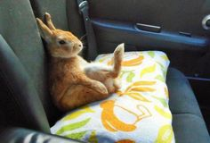 Yeah yeah. Pass me a carrot.