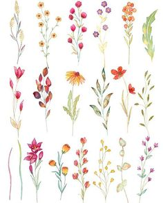 Wild flower watercolor clipart aquarel wild flowers floral elements autumn floral clipart wedding invitation boho floral clipart green The Delicate Flower Tattoo, Vintage Flower Tattoo, Small Flower Tattoos, Flower Tattoo Designs, Small Colorful Tattoos, Vintage Flower Prints, Beautiful Flower Tattoos, Floral Tattoos, Vintage Tattoos