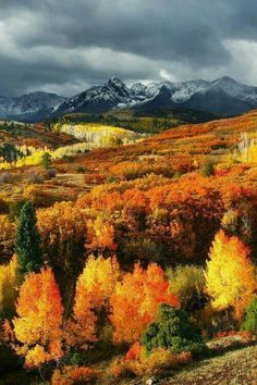 Autumn in Montana